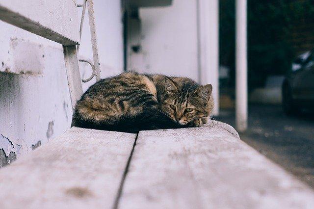 kočka na lavičce