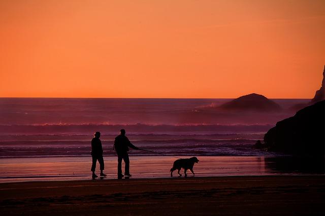 procházky se psem